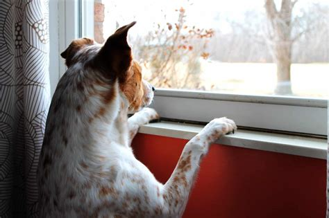 How Long Can You Leave a Dog Alone?   The Dog People by