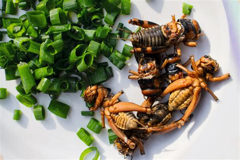 The Nordic Food Lab's Guide to Eating Insects and