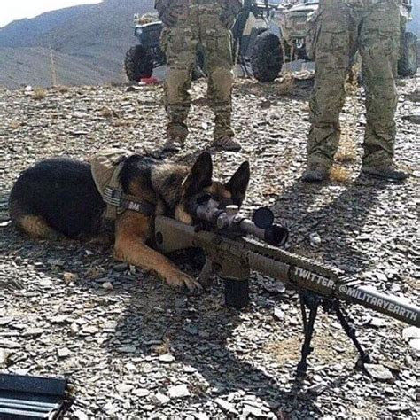 Military (@MilitaryEarth)   Twitter   Funny animal