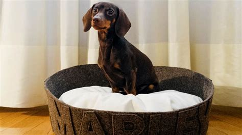 7 Custom-Made Dog Beds Crafted to Pamper Your Pooch   The