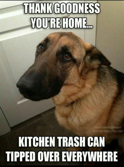 Funny Dog Pictures with Captions – I AM BORED